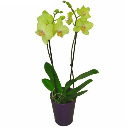 Orchid e verte acheter un bouquet livraison de for Acheter une plante verte