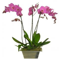 Coupe d'orchidées